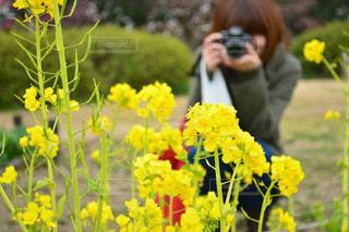 黄色の花の写真・画像素材[1833705]