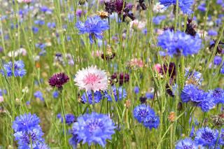 植物の色とりどりの花の写真・画像素材[3029605]