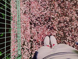 #桜,#春,#新生活,#さくら,#別れ,#出会い,#スタート,#卒業,#入学,#新たな1歩,#季節,#卒業式