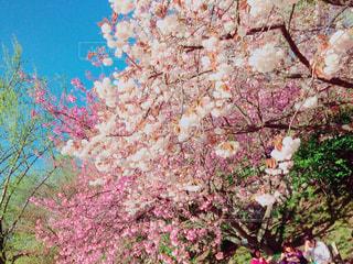 #桜,#春,#ピンク,#さくら,#別れ,#スタート,#卒業,#卒業式,#旅立ち,#新たなスタート,#終り