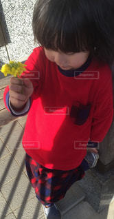 花の写真・画像素材[383412]