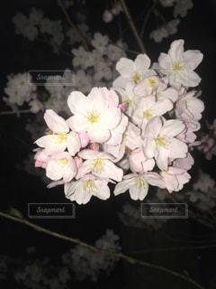#桜,#春,#新生活,#さくら,#別れ,#出会い,#スタート,#卒業,#卒業式,#旅立ち,#夜桜