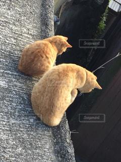 猫,動物,ねこ,アニマル,ツーショット