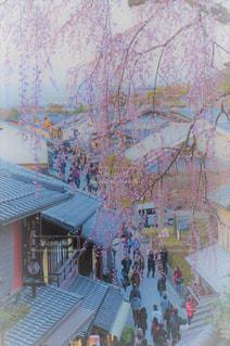 春の写真・画像素材[425084]