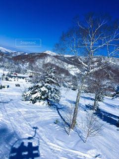 雪景色の写真・画像素材[1099344]