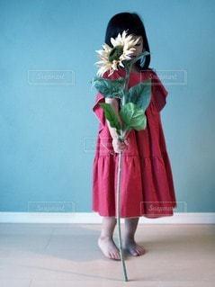 向日葵と、赤いワンピースの女の子の写真・画像素材[3422301]