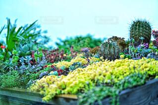 色とりどりの多肉植物のお庭の写真・画像素材[4371538]