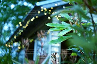 夜に向かうお庭の写真・画像素材[4371605]