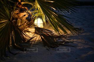 椰子の葉の影の写真・画像素材[4419109]