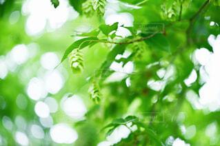 5月の樹々の写真・画像素材[4420464]