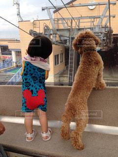 犬を見ている子の写真・画像素材[980786]