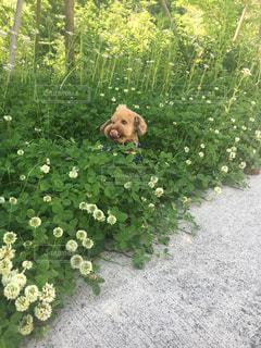 犬,お花見
