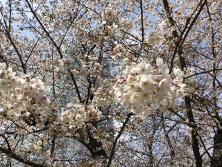 春 - No.412995