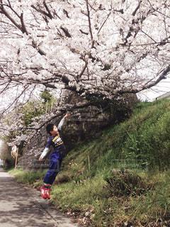 No.423191 春