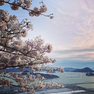 春 - No.401742