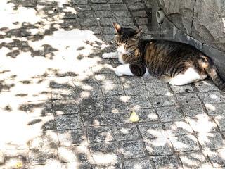 日陰で休むネコの写真・画像素材[1285540]