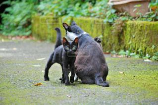 猫,自然,風景,LOVE,親子,2匹,仲良し,ねこ,愛,ラブ,cat,family,アニマル,nature,animal,ネコ,ツーショット