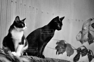 猫,自然,風景,動物,2匹,仲良し,ねこ,cat,family,アニマル,nature,animal,ネコ,ツーショット
