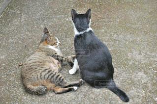 猫,自然,風景,動物,親子,後ろ姿,2匹,仲良し,ねこ,cat,family,nature,animal,ネコ,ツーショット
