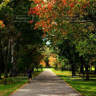 道の端に木のパス - No.846547