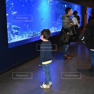子ども,魚,水族館,休日,鑑賞