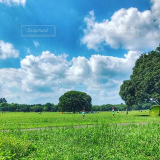 青空がきれいの写真・画像素材[1098351]