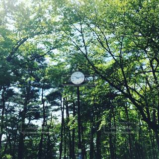 森林浴の写真・画像素材[1157626]