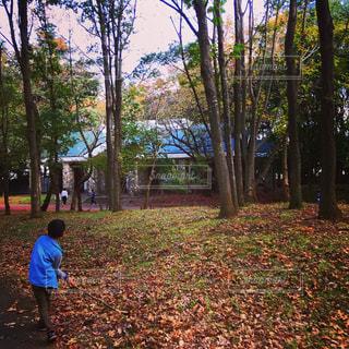 子ども,秋,紅葉,未来,冒険,夢,ポジティブ,希望,目標