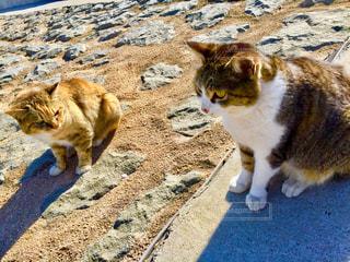 猫,にゃんこ,散歩,ねこ,昼,野良猫,ぬこ,ネコ,ツーショット