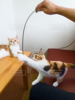 猫,にゃんこ,子猫,ぬこ,ネコ,ツーショット