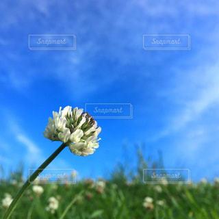 近くの花のアップの写真・画像素材[1313950]