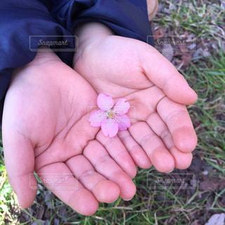 No.383510 桜