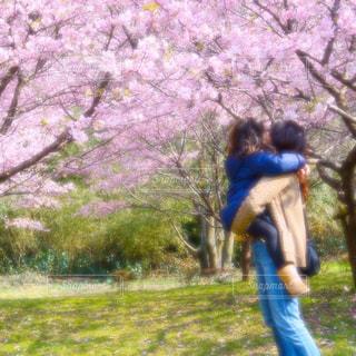 No.393911 桜