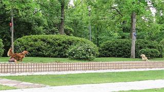 犬,風景,公園,仲良し,ツーショット