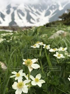 植物の白い花の写真・画像素材[766023]