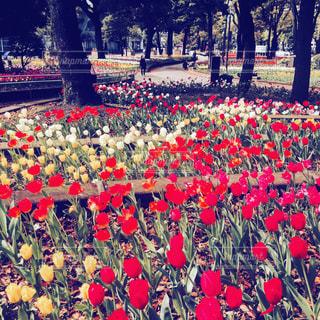 公園 - No.437438