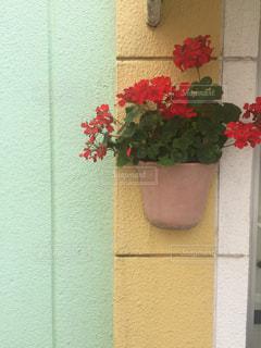 建物の上に座って花の花瓶の写真・画像素材[1036281]
