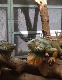 動物園の写真・画像素材[395424]