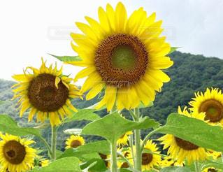 花の写真・画像素材[618290]