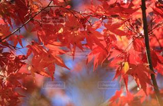 近くの木のアップの写真・画像素材[871902]