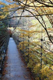吊り橋の写真・画像素材[877097]