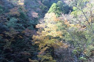 フォレスト内のツリーの写真・画像素材[877099]