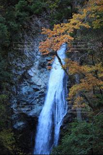 森の中の滝の写真・画像素材[877100]