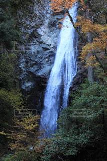 森の中の滝の写真・画像素材[877104]