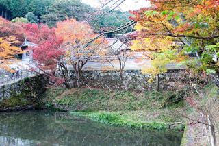 背景の水の庭の写真・画像素材[878006]