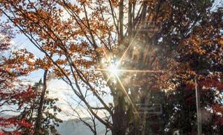 閃光の写真・画像素材[927058]