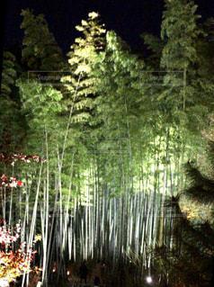 竹林のライトアップ - No.929637