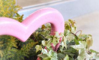 観葉植物とハートの飾り物の写真・画像素材[1117845]