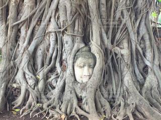 観光,タイ,海外旅行,アユタヤ