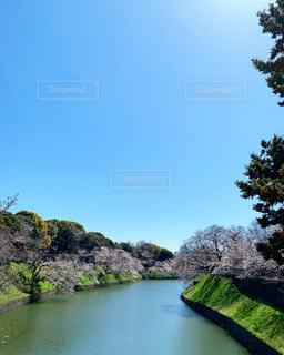 自然,風景,春,桜,水面,花見,樹木,草木